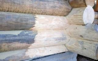 Синева на древесине что это?