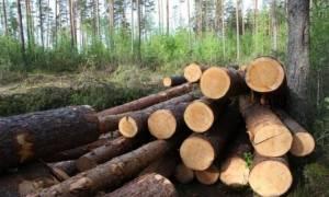 Сортамент древесины хвойных пород