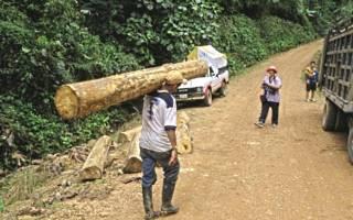 Самая легкая древесина в мире