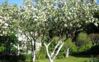 Можно ли фасадной краской красить дерево?