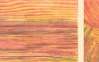 Грибные поражения древесины